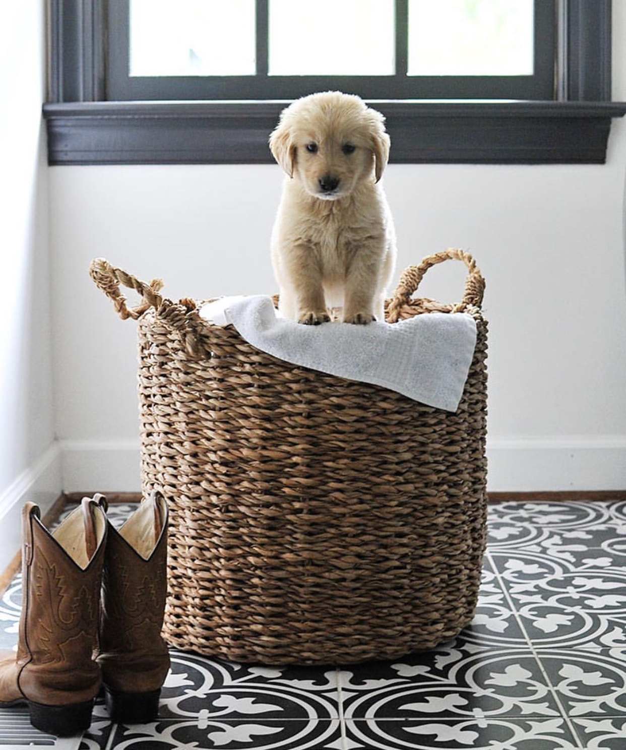 Puppy dog in a basket! Love the tile and dark millwork