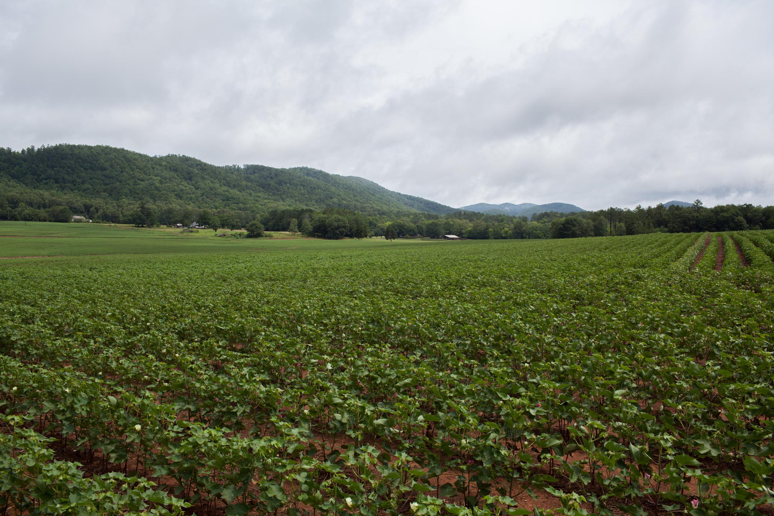 Fields  2015