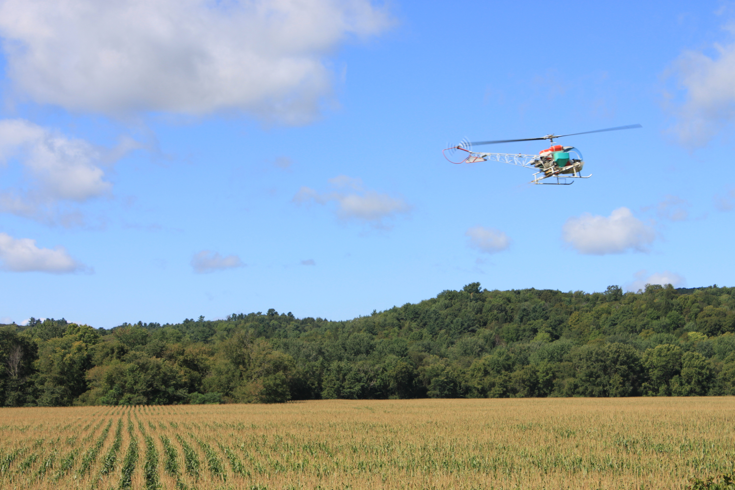 A helicopter spreads winter rye seed down over a corn field. When the corn is harvested, the rye will remain, enriching the soil and preventing erosion.