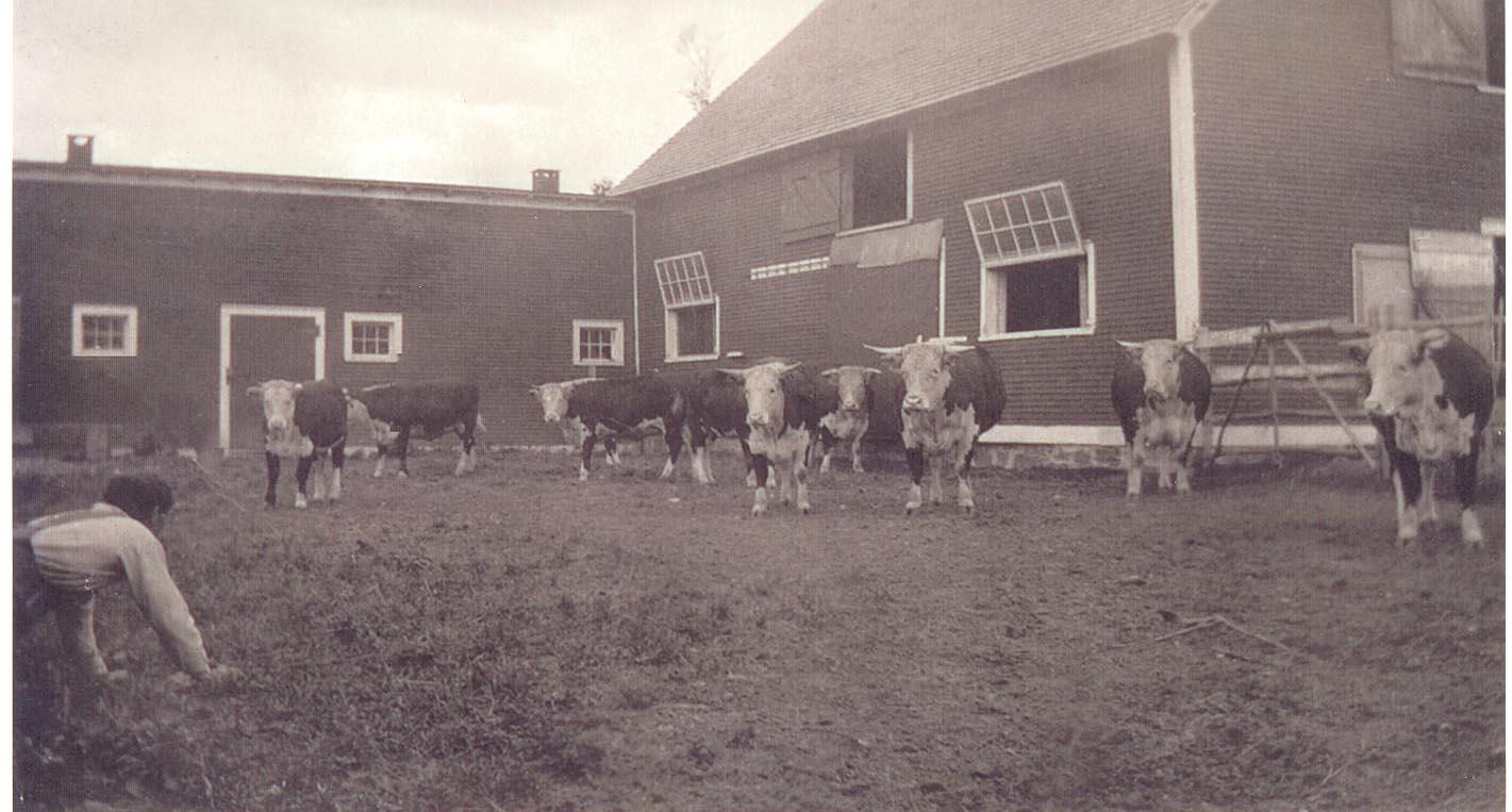 An old shot of the barnyard.