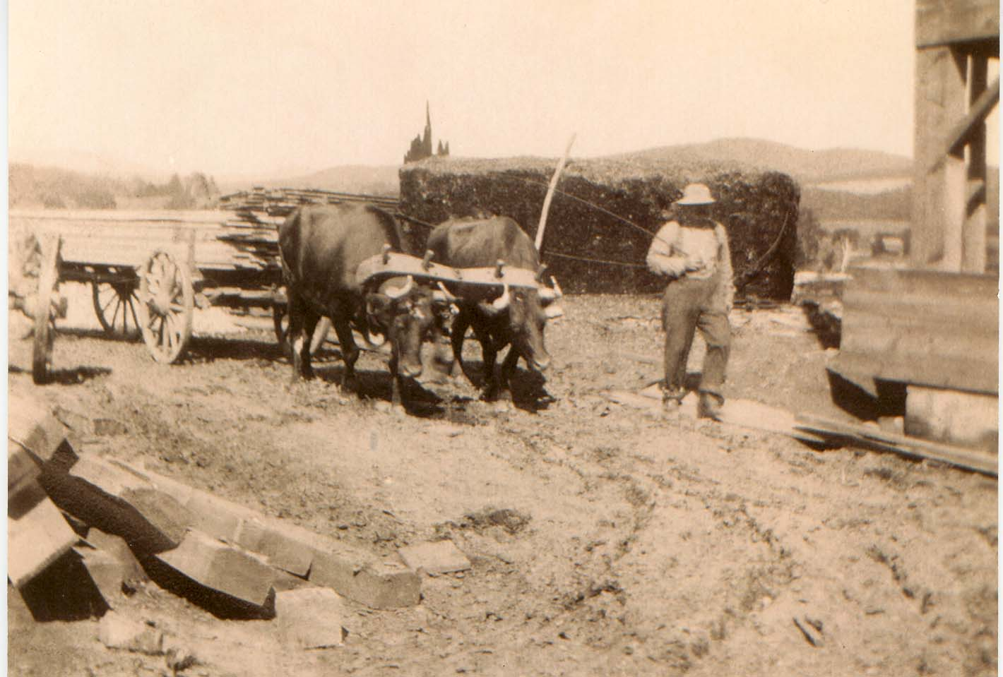 Before tractors, oxen supplied the strength for many farm tasks. Pictured: Leverette Conant