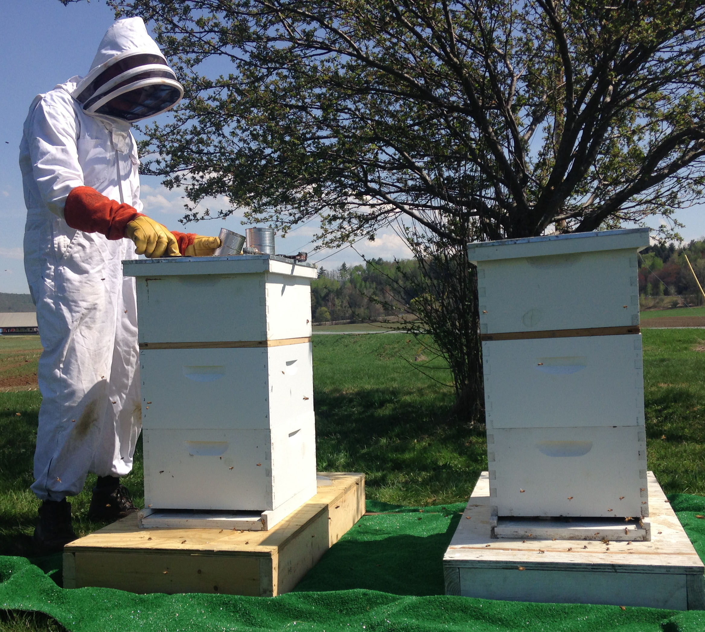 We keep bees to help pollinate our flowers and pumpkins