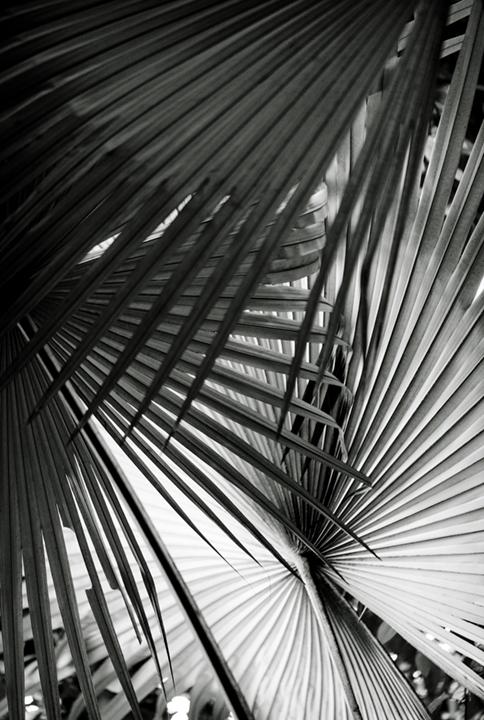 ©nathandehart-palms--2.jpg