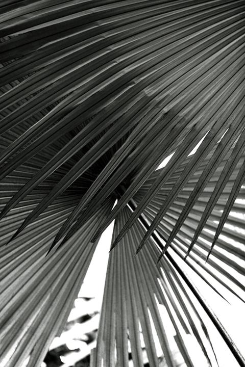 ©nathandehart-palms--3.jpg