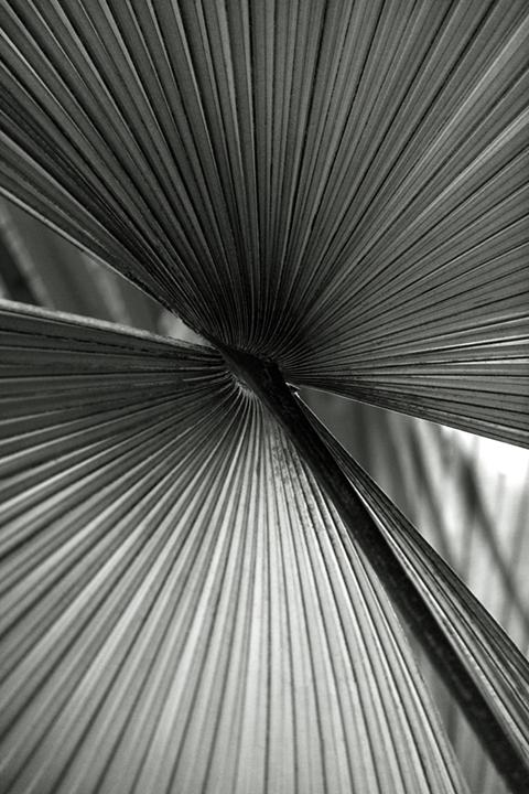 ©nathandehart-palms--4.jpg