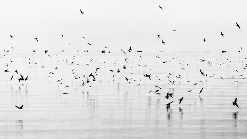 RH NATURE   These black-and-white photographs portray the natural world in both intimate and expansive terms.  VIEW MORE →
