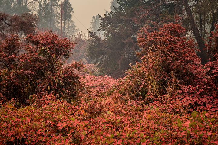 ©nathandehart-valleyfire2015-4.jpg