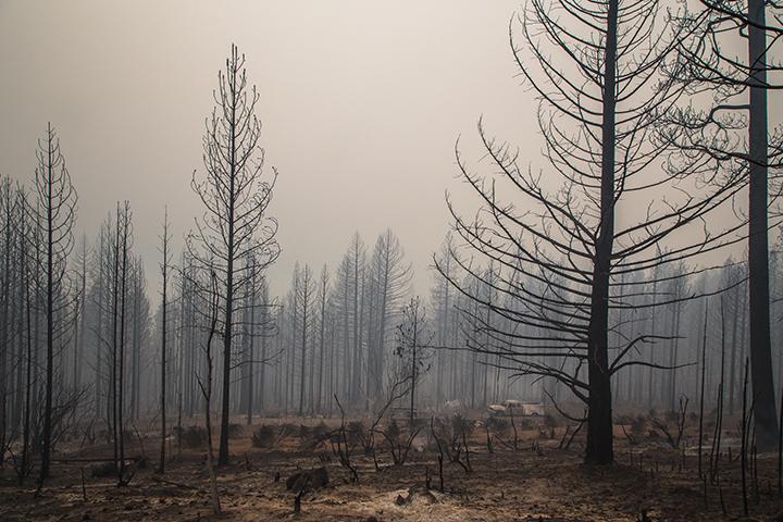 ©nathandehart-valleyfire2015-7.jpg