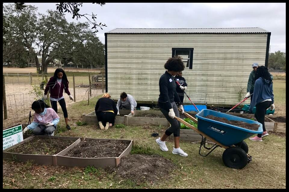 USF students Prepping the gardens for Greco Agriculture students for spring planting.