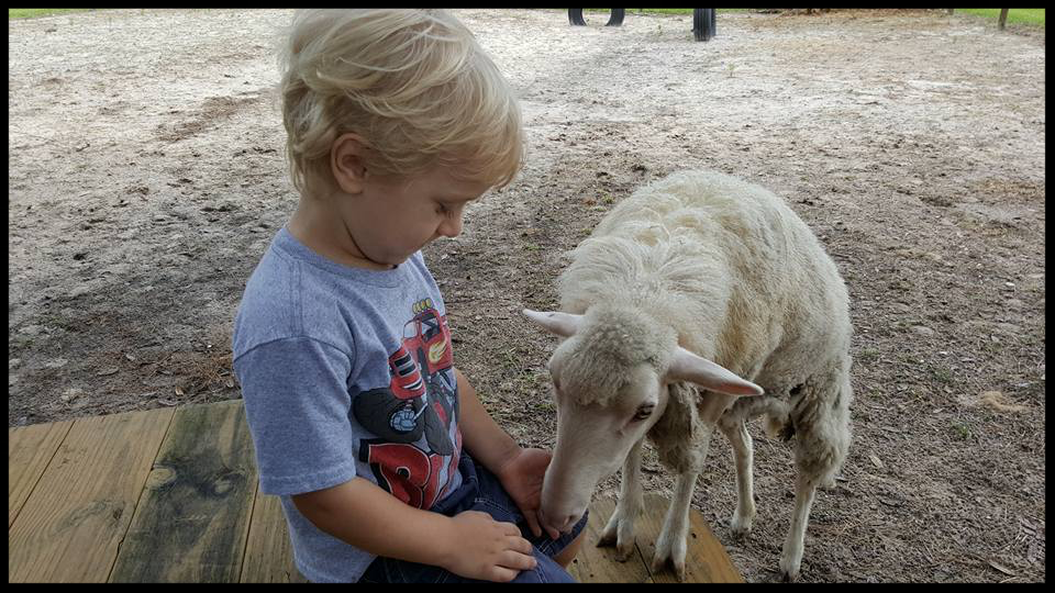 Julian shares a carrot with Dolly.
