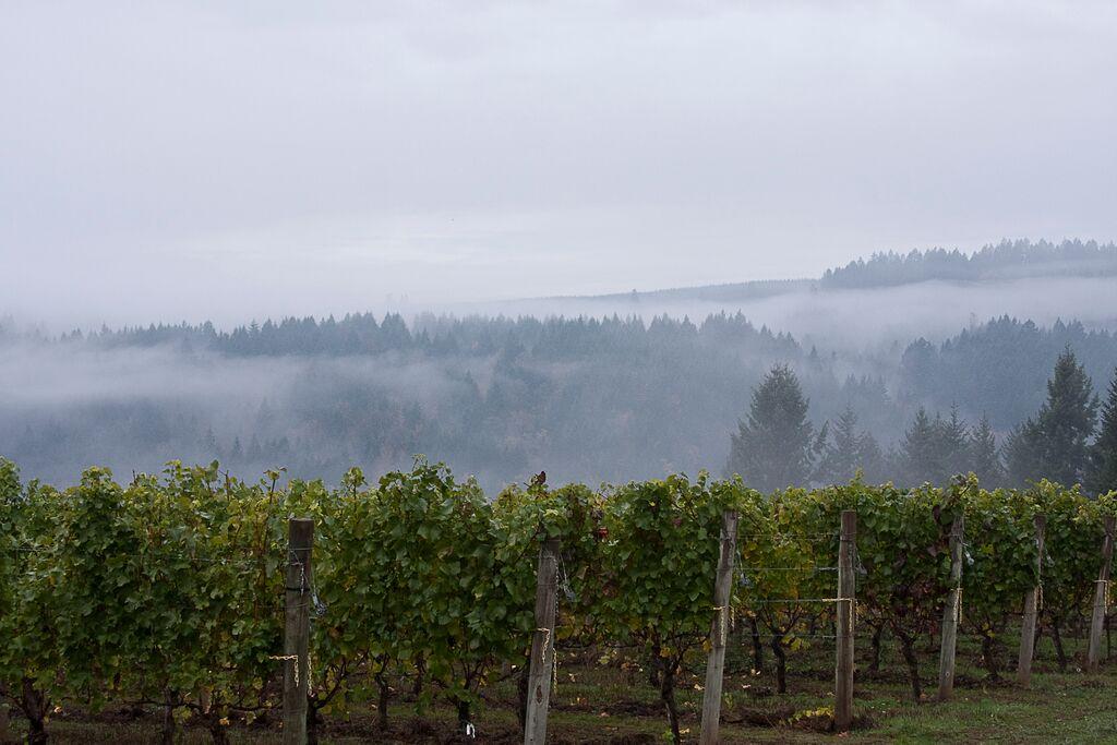 Estate Vineyard (good for website).jpg