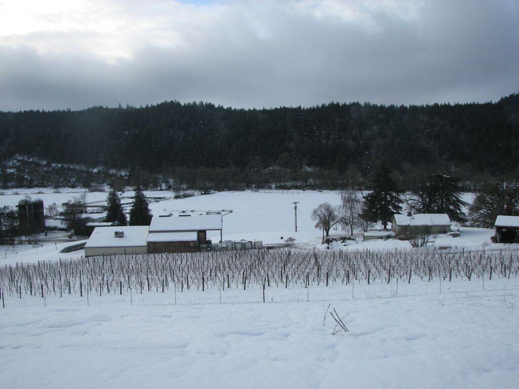 Estate Vineyard in snow.jpg