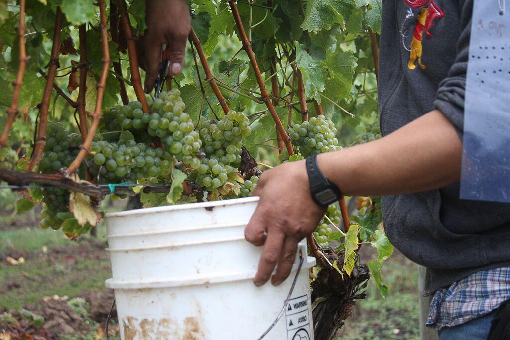 Hand Harvest Estate Fruit.jpg