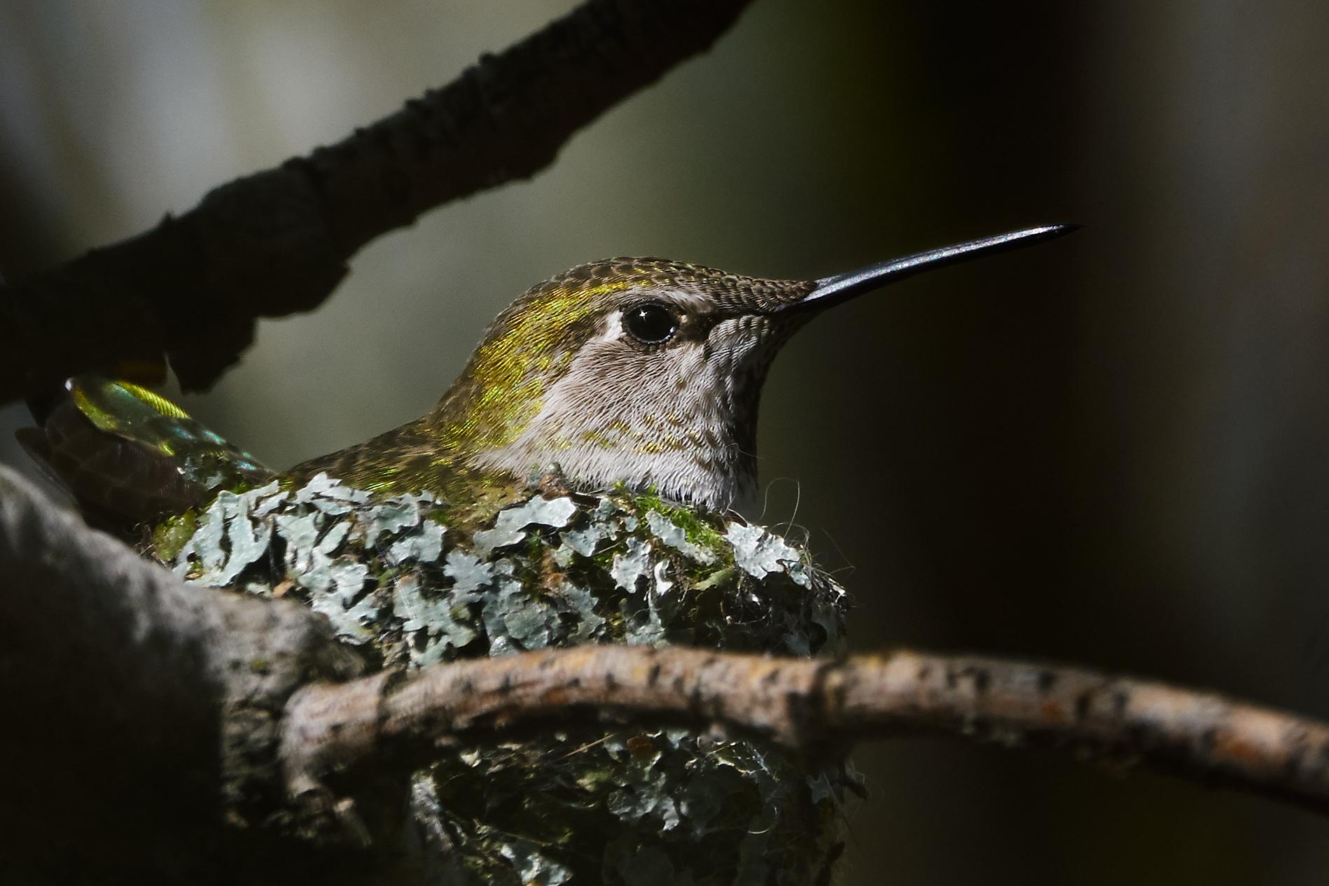 Nesting Mother