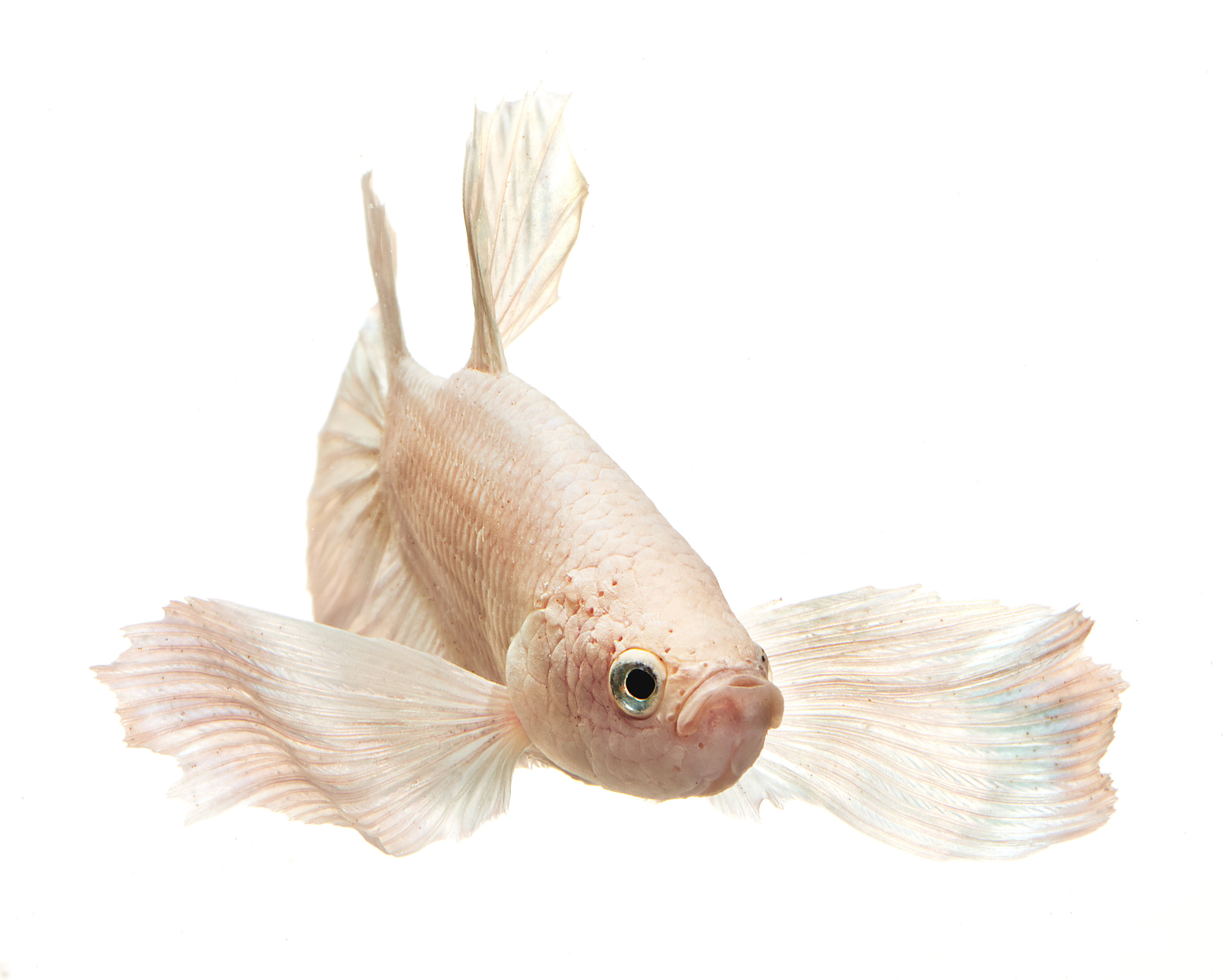 2019_Bettafish00089.jpg