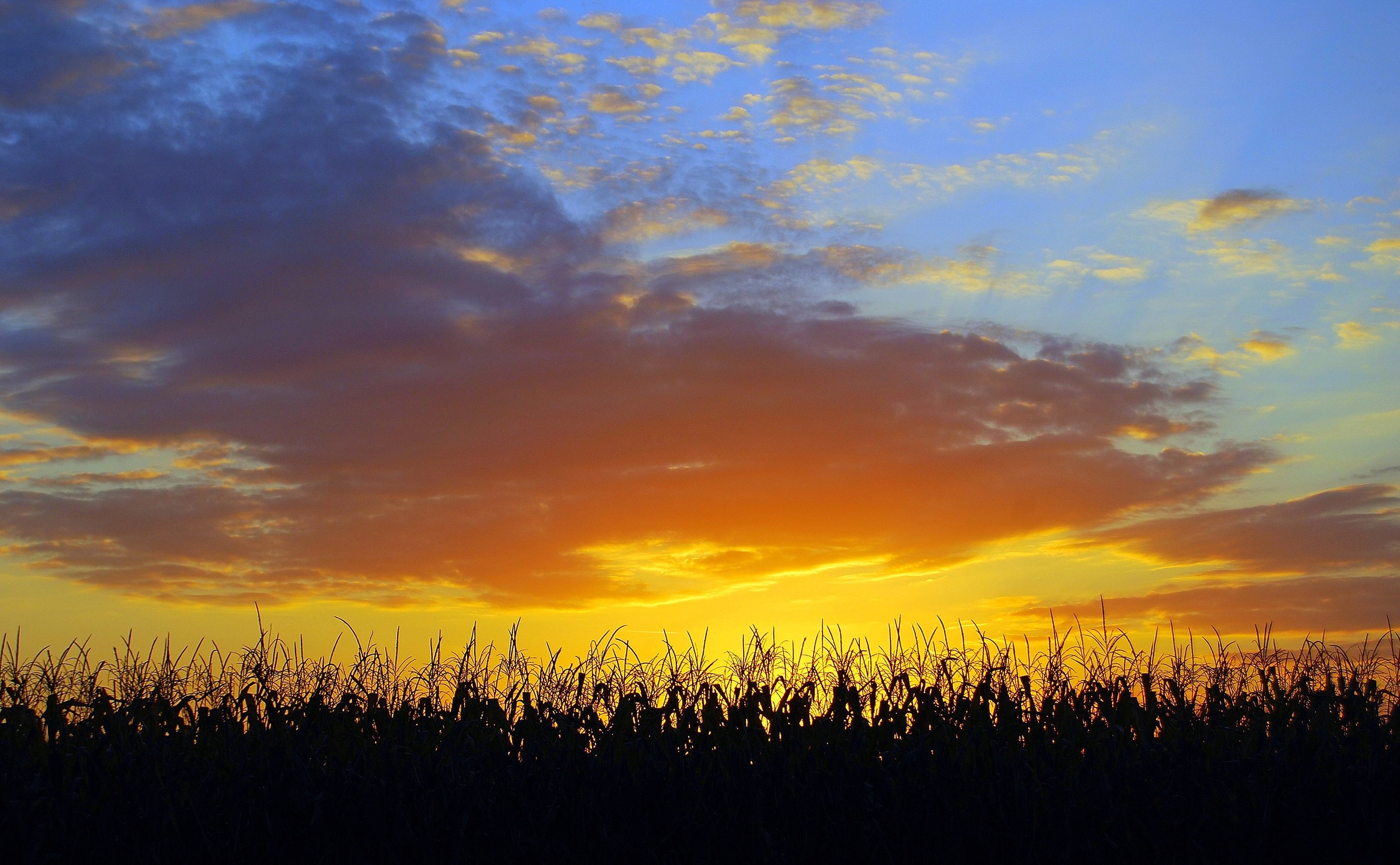 Iowa Beauty (Above the Corn) Nathan Fischer 2008 Photograph 11x14 or custom