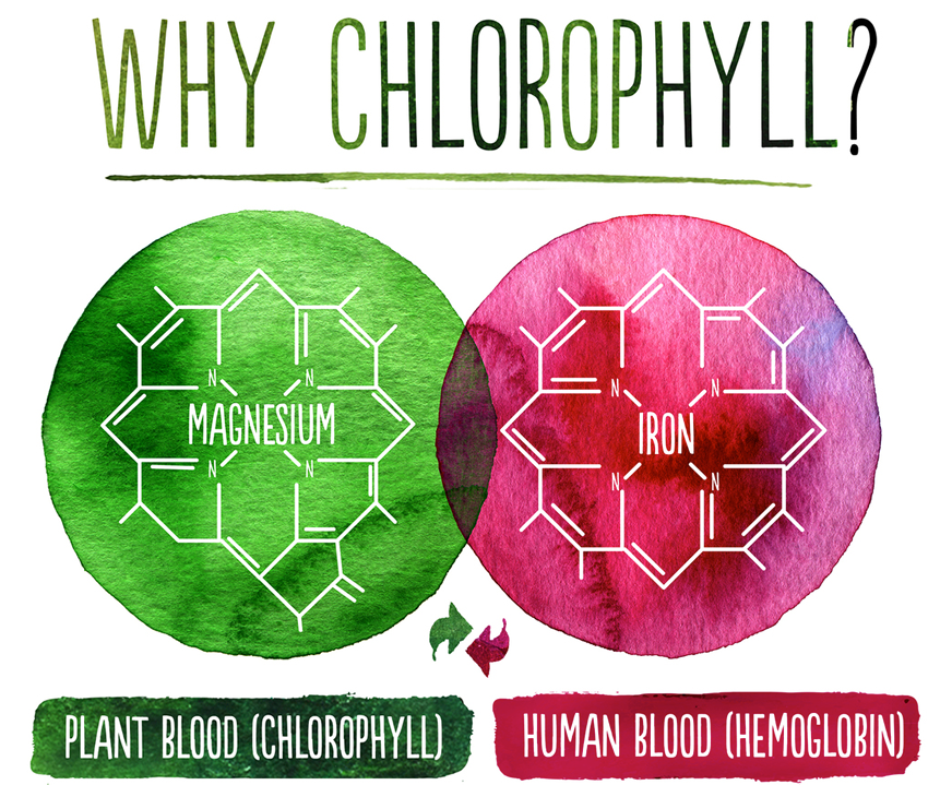 why_chlorophyll.png