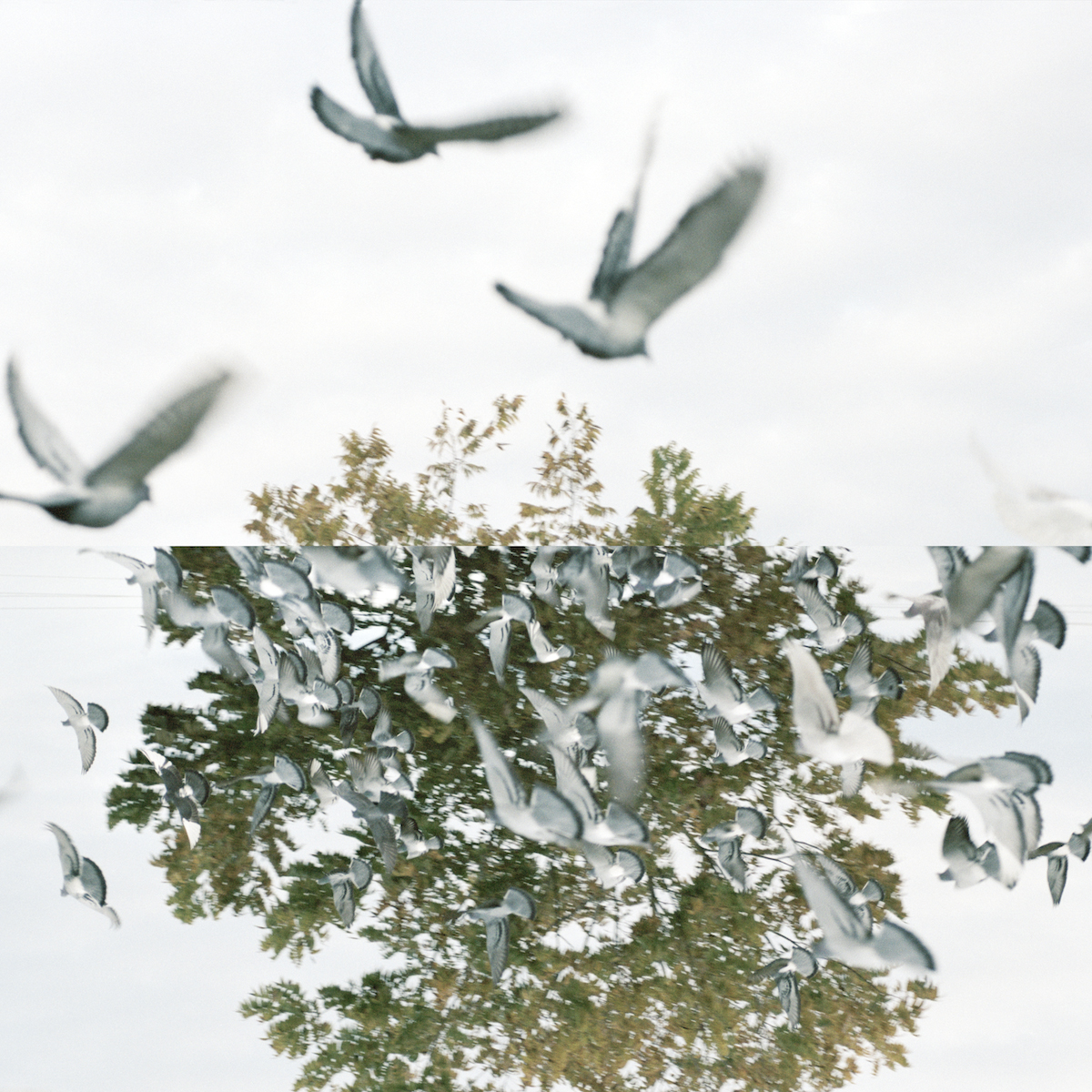 The Illuded Perception of Flight