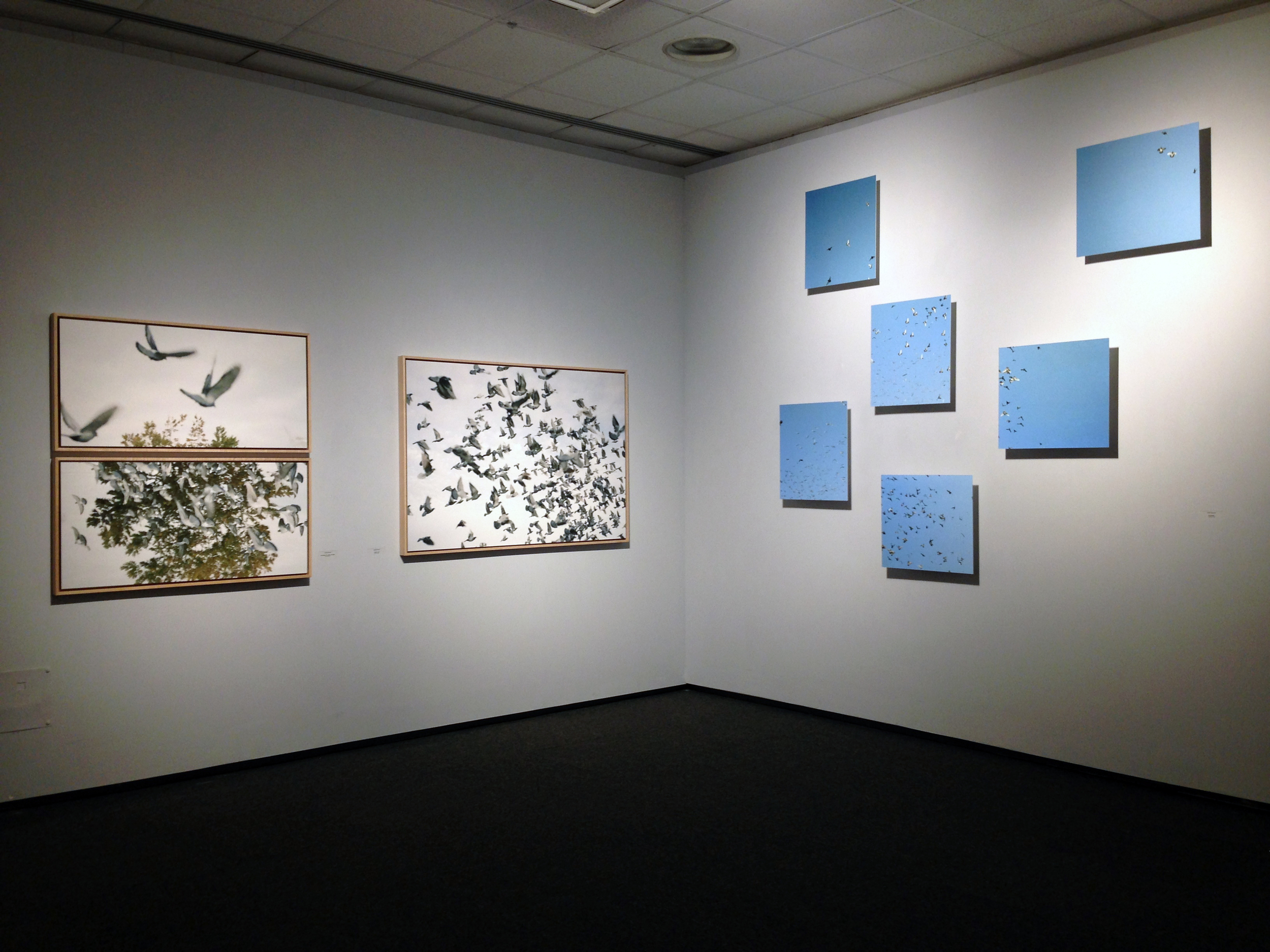 Illuded Perception Installation View