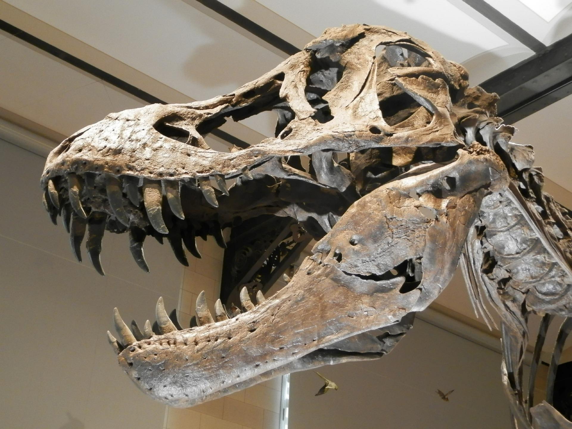 dinosaur-2628309_1920.jpg