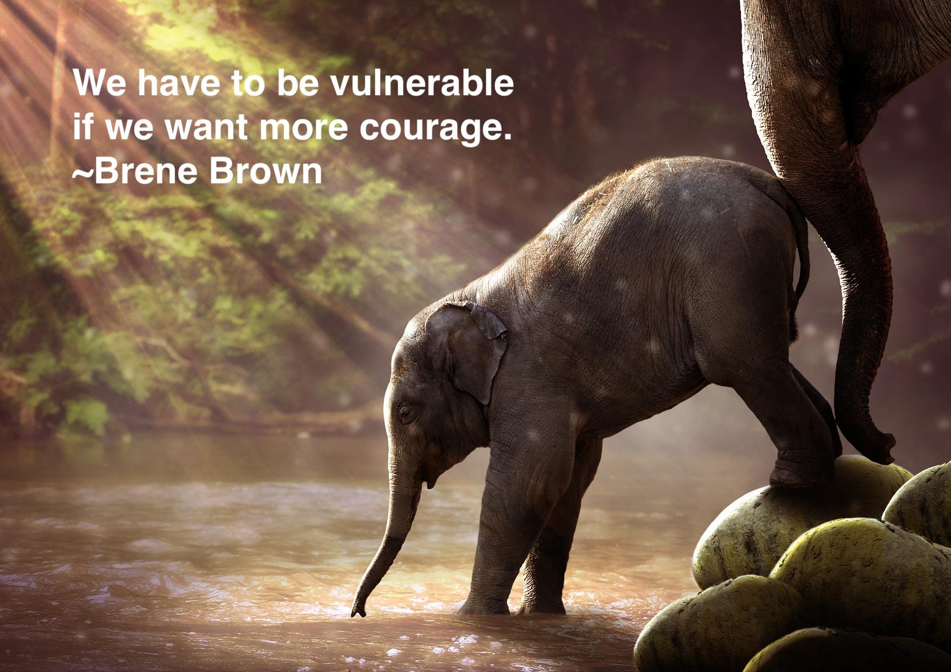 elephant-2380009_1920_vulnerable quote.jpg