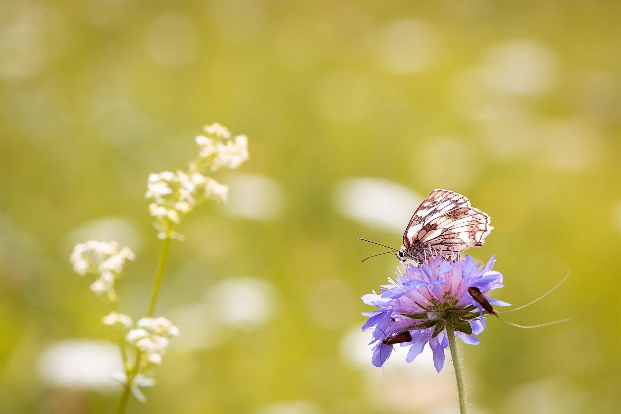 animal-beautiful-bloom-414048.jpg