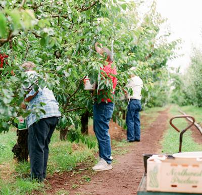 Picking_Fruit.jpg