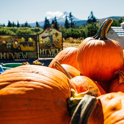 Pumpkin_Patch_Close