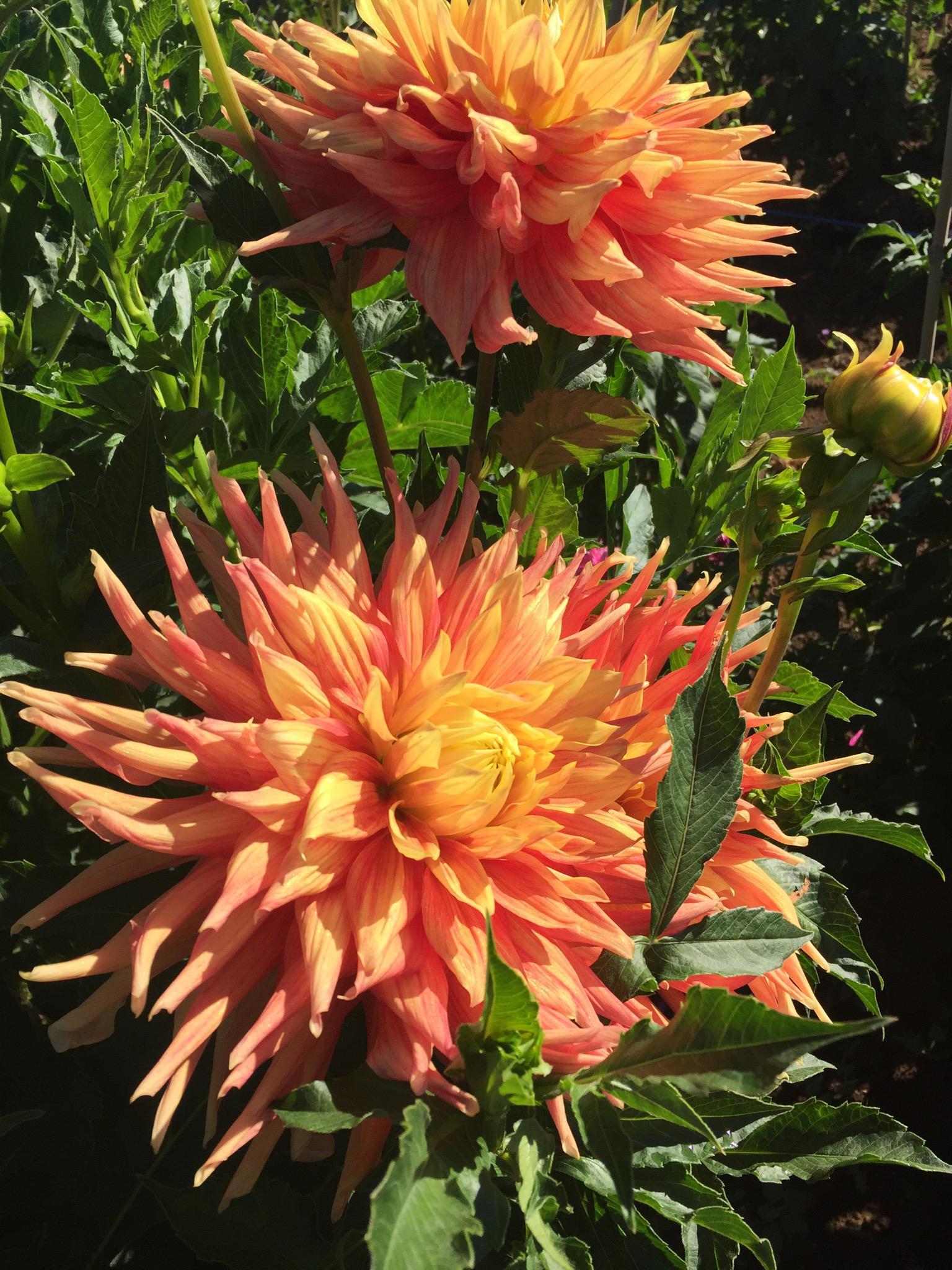 Mt_View_Flowers-5.JPG