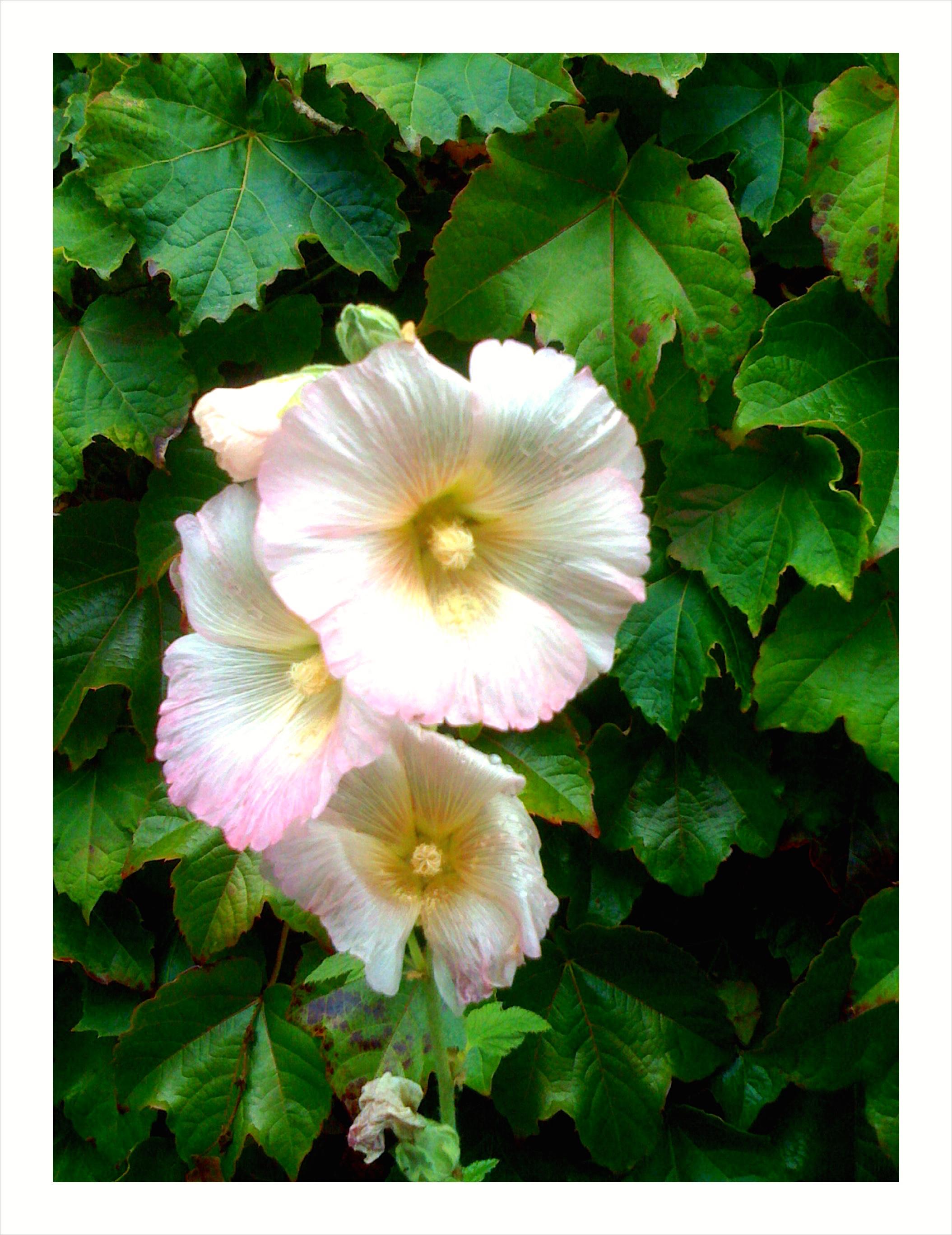Getty flower.jpg