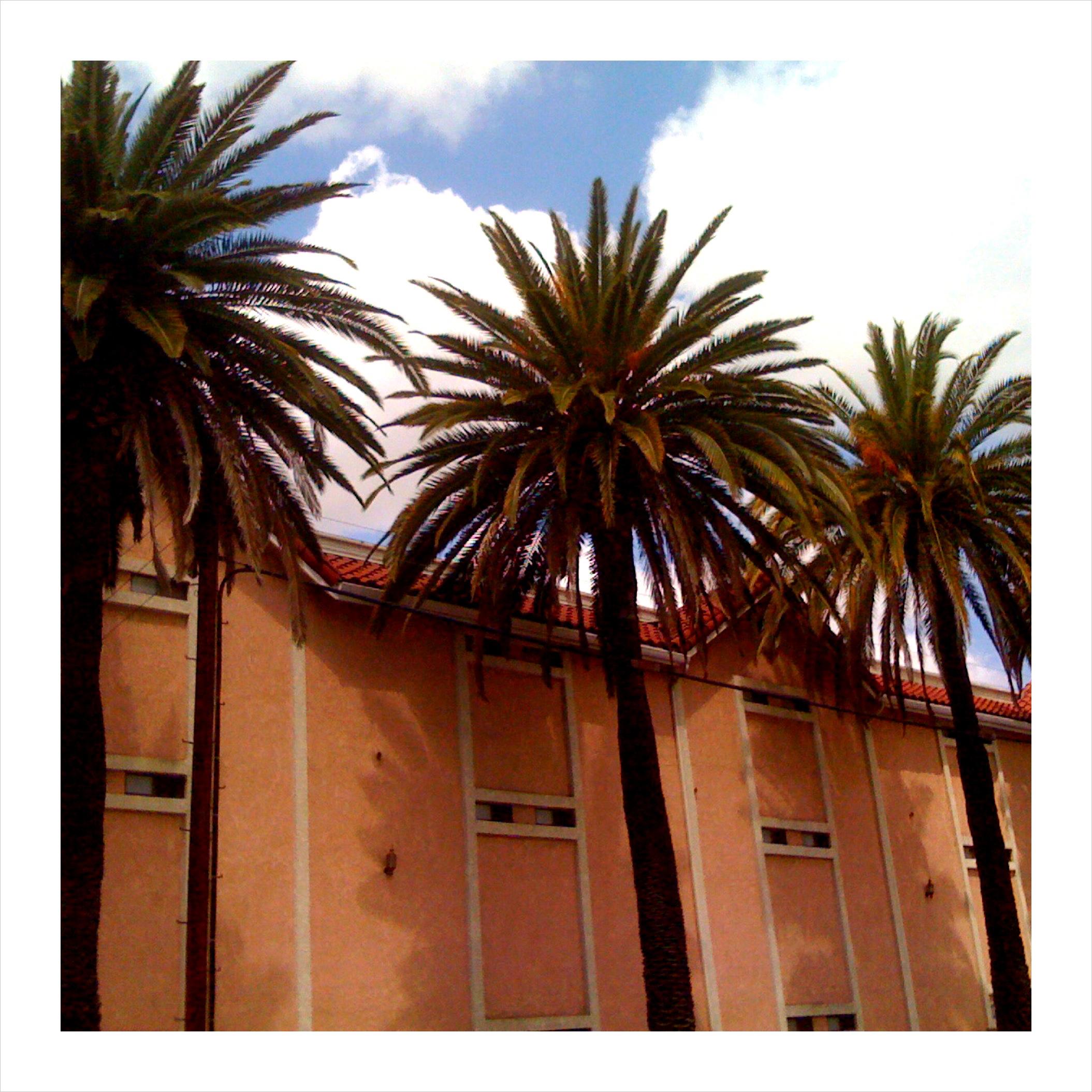 Three palms.jpg