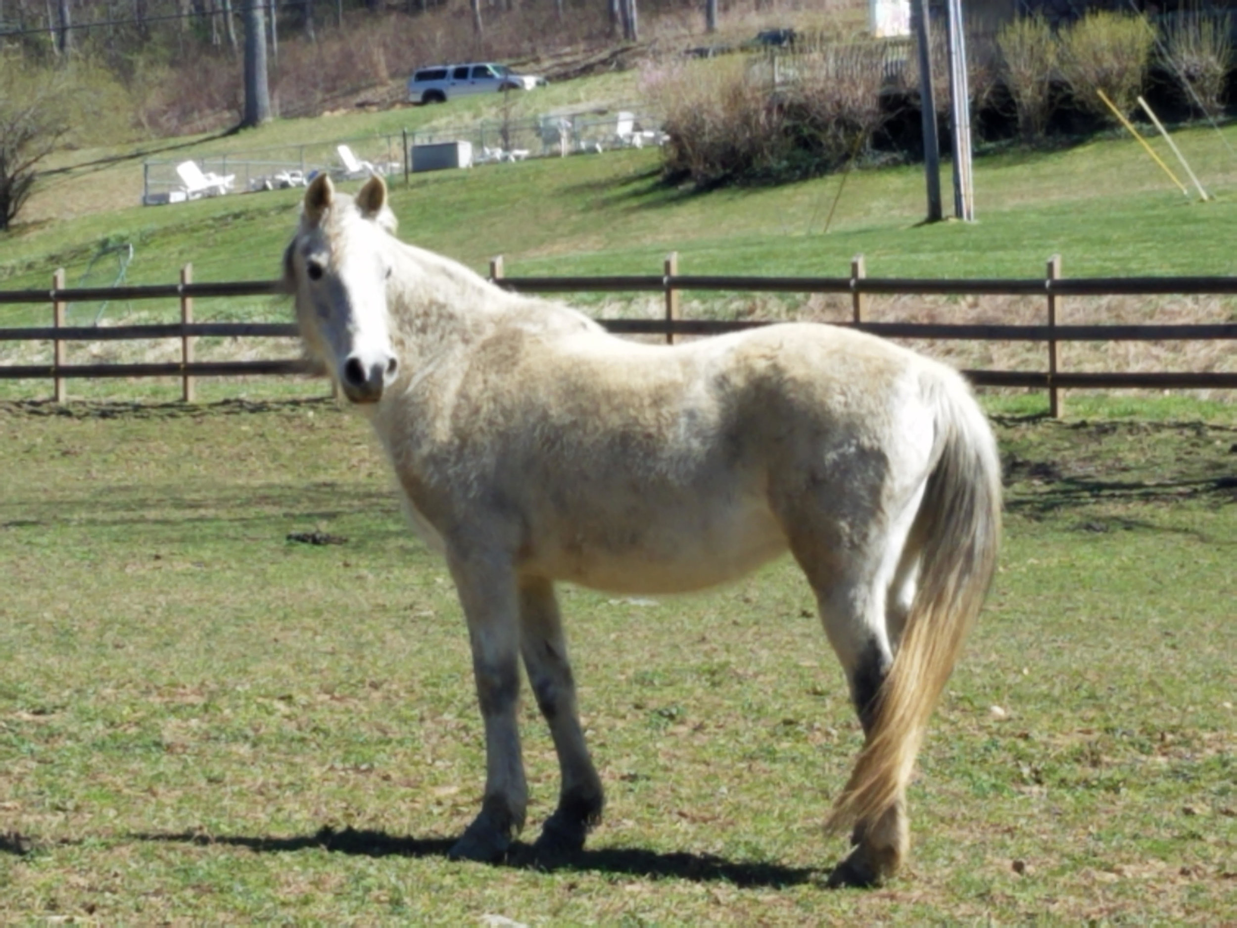 Horses to Adopt — Hope for Horses
