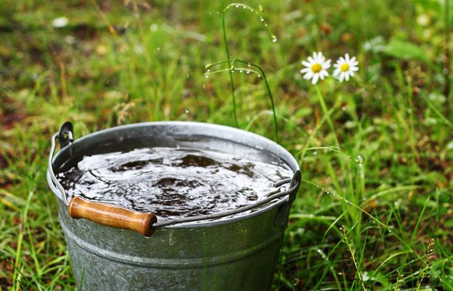 Bucket-Water-Grass-Daisies.jpg.838x0_q80.jpg