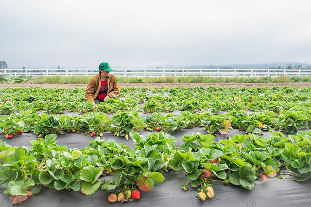 We've been conducting research and interviews for Food Vision 2030 for over two months now, focusing on our first topic: Food Production in San Diego County. We'd love to extend the question we've been asking our local experts to you:  What is the future of food production in San Diego County? Comment below or send us a DM.