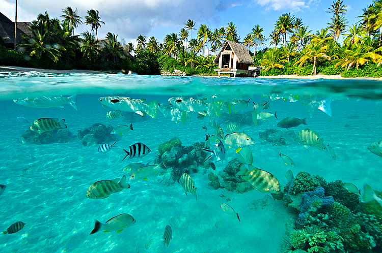 Snorkling on the Reef, The Wedding Chapel