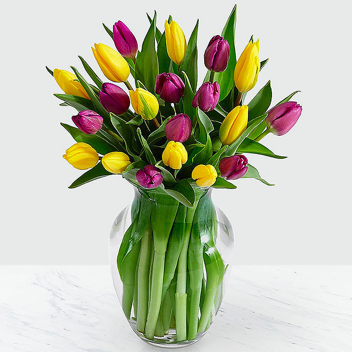 20 Royal Purple Tulips