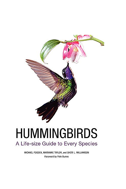 hummingbirds-a-life-sized1=guide.jpg