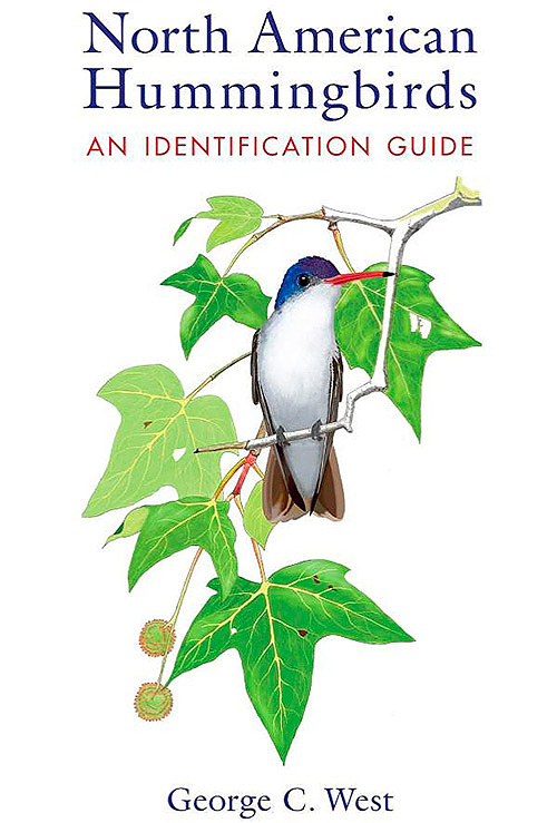 north-american-hummingbirds-identification-guide-500-75.jpg