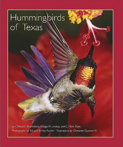 hummingbirds-of-texas.jpg
