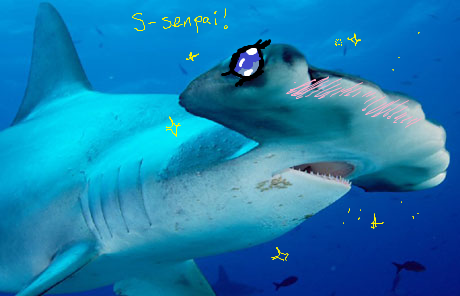 Shark Week should cover the real issues: people MS painting sharks into anime things. This has nothing to do with goals. ( img src )