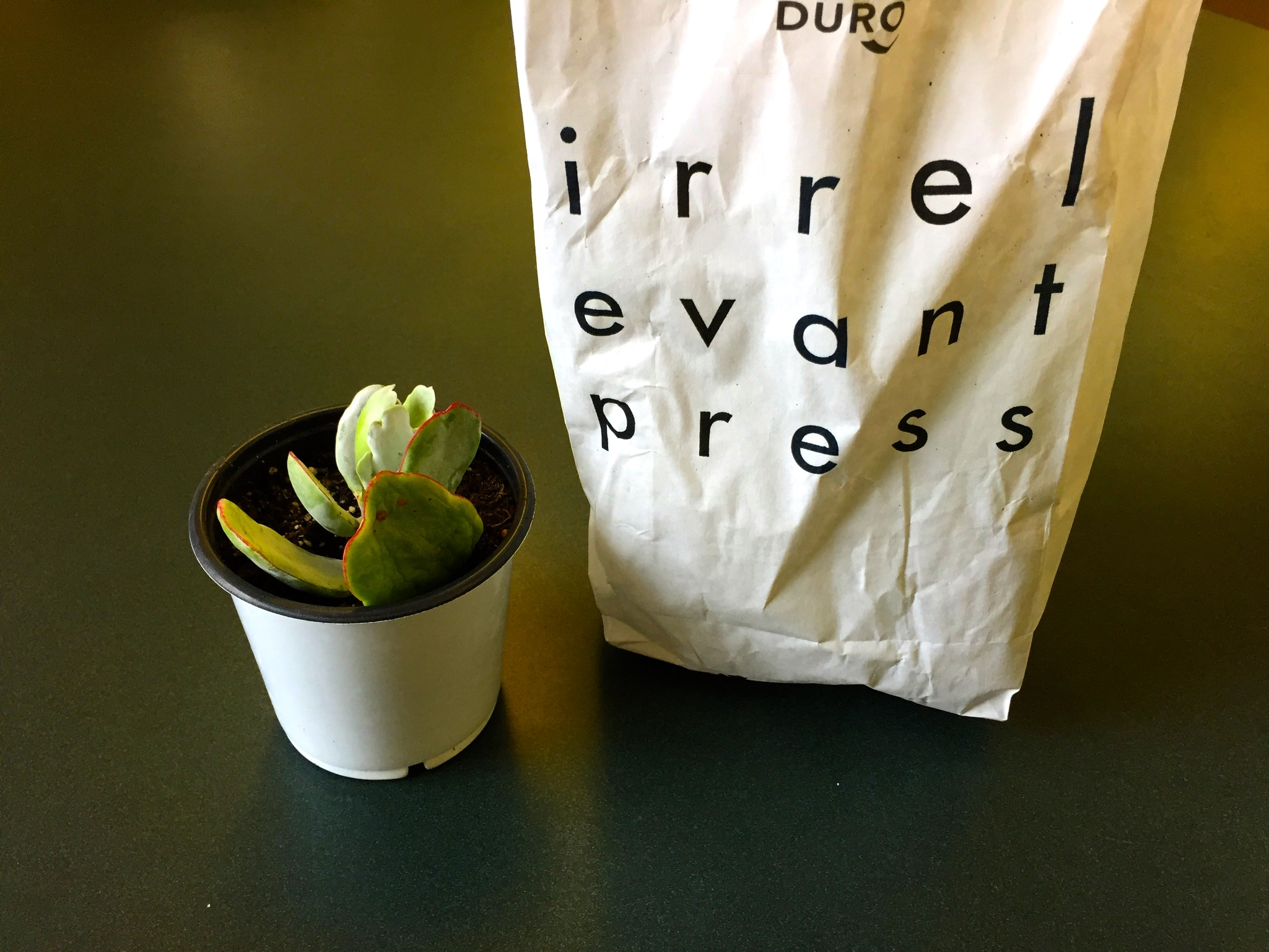 Irrelevant Press paper bag and a small plant.