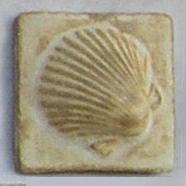 Small Shells 2