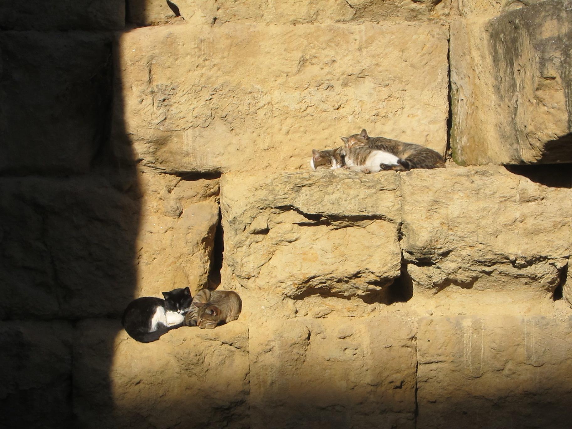 Kittens sleeping in the sun on Roman ruins in Córdoba :)
