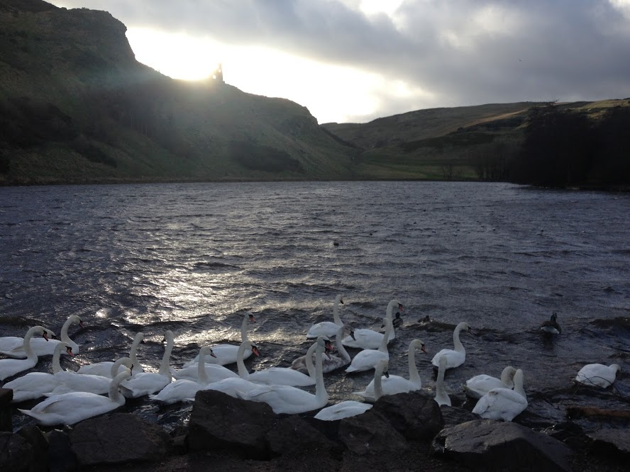Geese being blown by the wind at Arthur's Seat