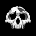 By T. Michael Keesey (Zanclean skull Uploaded by FunkMonk) [CC BY 2.0 (http://creativecommons.org/licenses/by/2.0)], via Wikimedia Commons