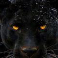 black-panther-2719263.png