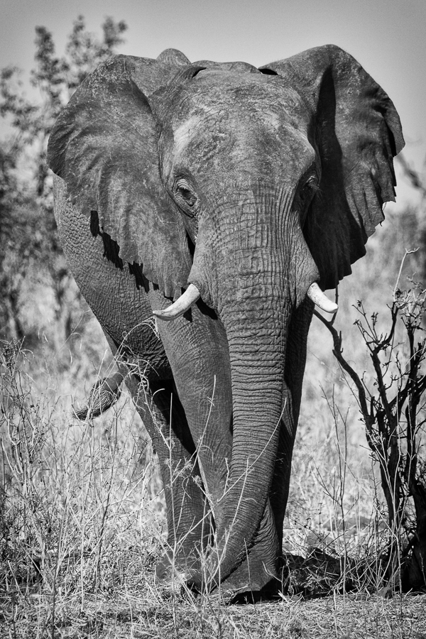 Elephant full