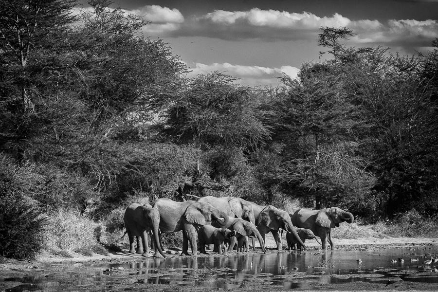Elephant Sc