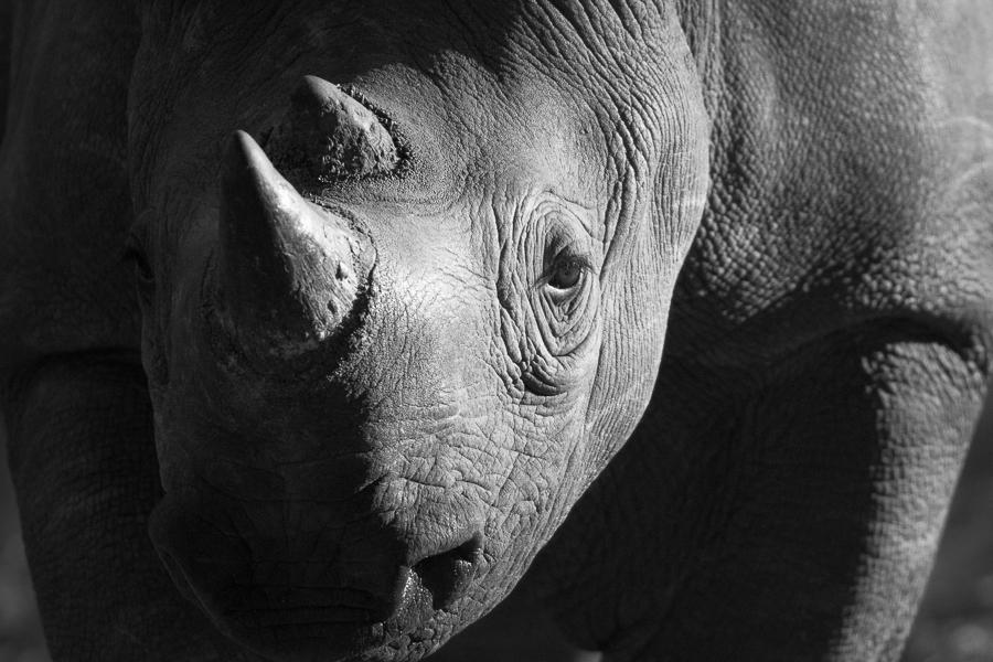 Rhino wide