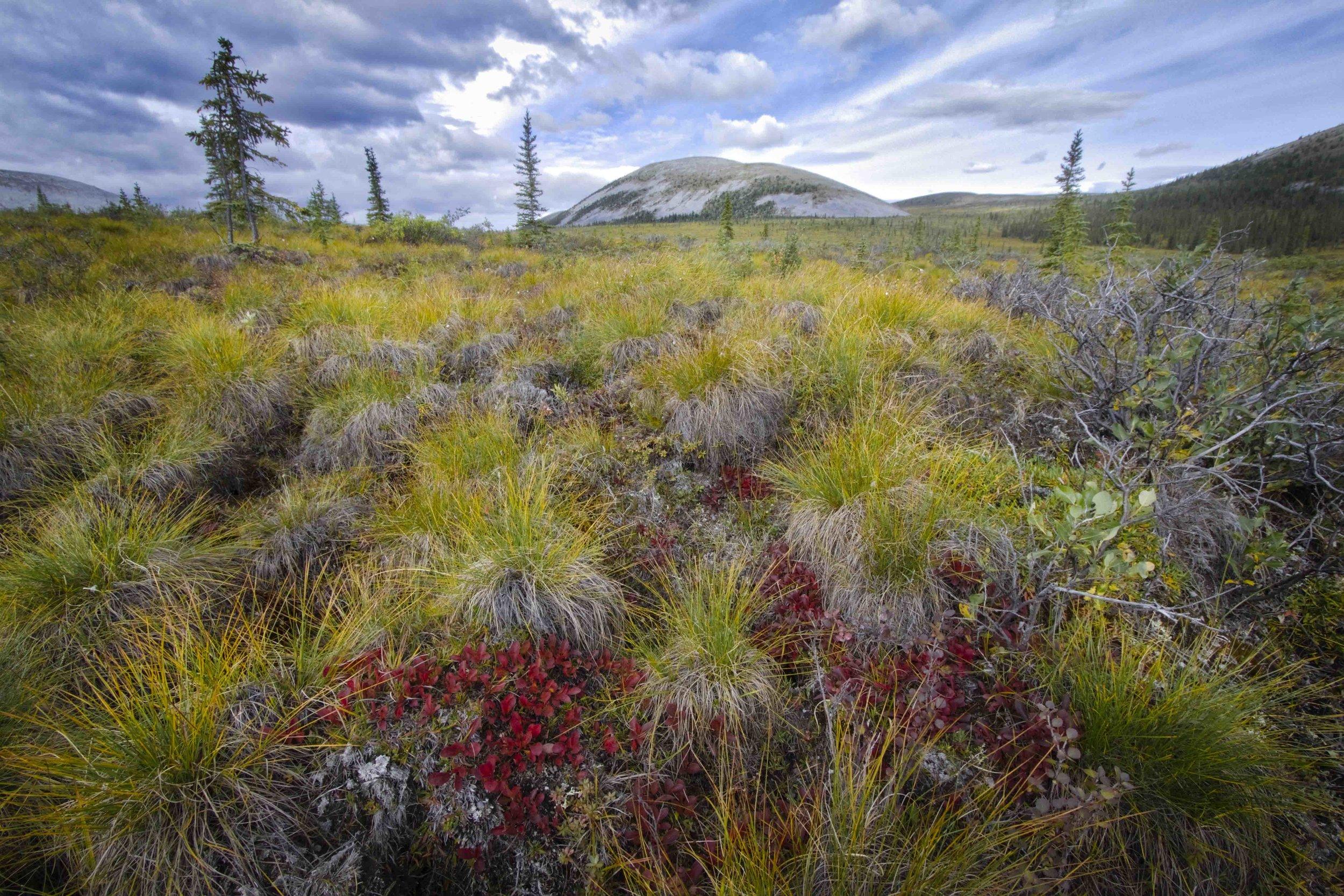 Dempster Highway, Roadtrip, Landscape, Arctic, rob gubiani, Tundra, Tombstone, Tuktoyuktuk, Inuvik, Dempster, Yukon, travel, wanderlust,